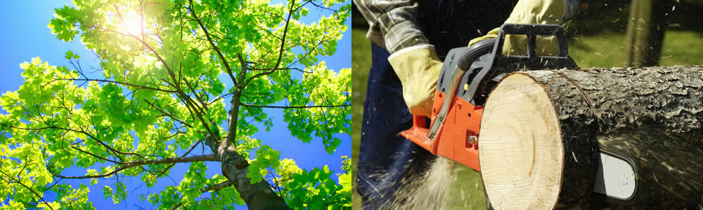 Tree Services Land O Lakes